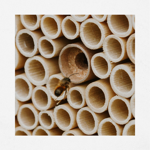 BeeHome abeilles sauvages